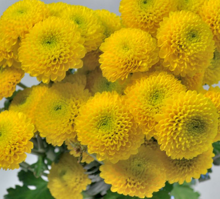 Best yellow flowers