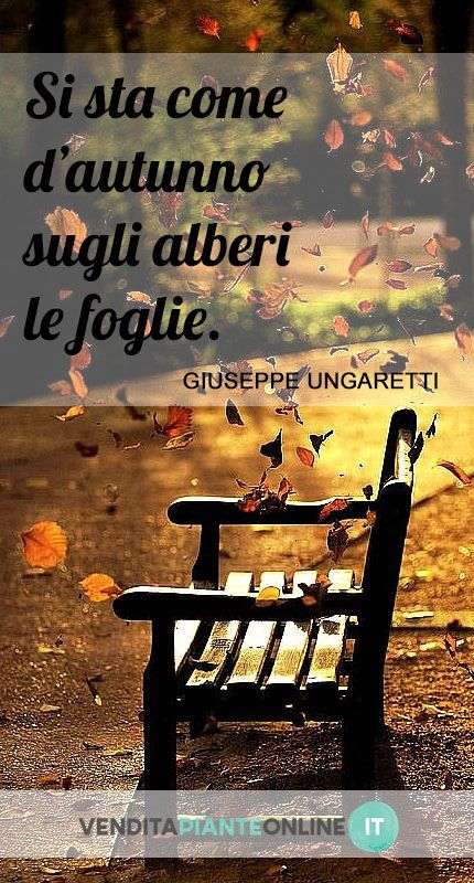 www.venditapianteonline.it #nature #november #fall #aforismi