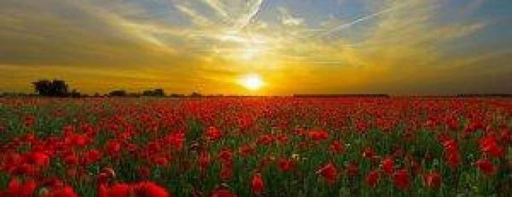 Remembrance in Hillingdon
