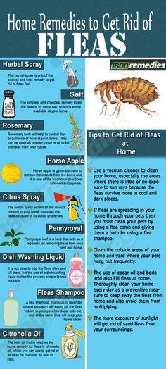17 Best Ideas About Home Remedies Fleas On Pinterest