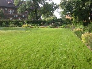 Zielony, bujny trawnik.  #projektowanie ogrodów, #hurtownia kamienia, #projektowanie ogrodów Toruń, #projektowanie ogrodów Bydgoszcz, #ogrody Toruń, #ogrody Bydgoszcz