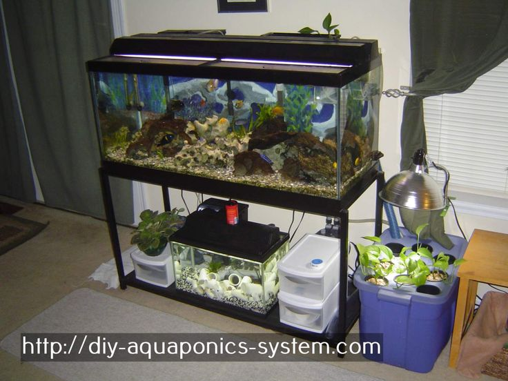 aquaponics bed - home aquaponics systems for sale.aquarium gravel for aquaponics 5807213883