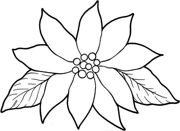 Blooming Poinsettia Coloring Page. Use for tissue paper