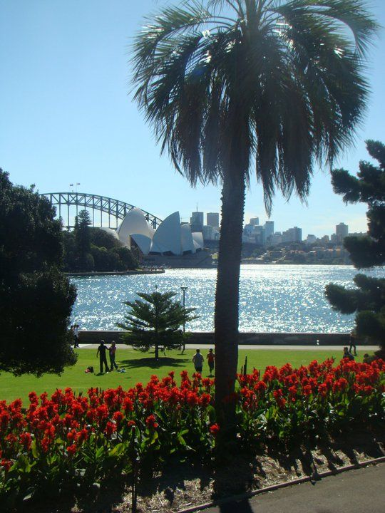 View of Harbour Bridge from Sydney Botanical gardens