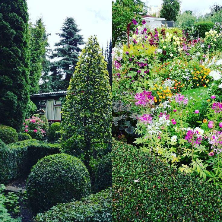#relax #rust #awareness #vakantie Amstelveen #Netherlands #NoordHolland #garden #flower #shrub #hedge #tree #summer #botanical #flora #lawn #park #topiary #yard #leaf #nature #outdoors #ivy #house #outside #rhododendron