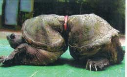 This is a deformed turtle as a result of plastic pollution. Is this what we want?