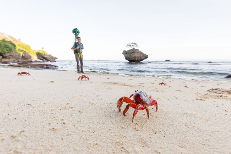 a crabtivating journey street view joins a crab migration of millions on christmas island millions of crabs are are emerging from the depths