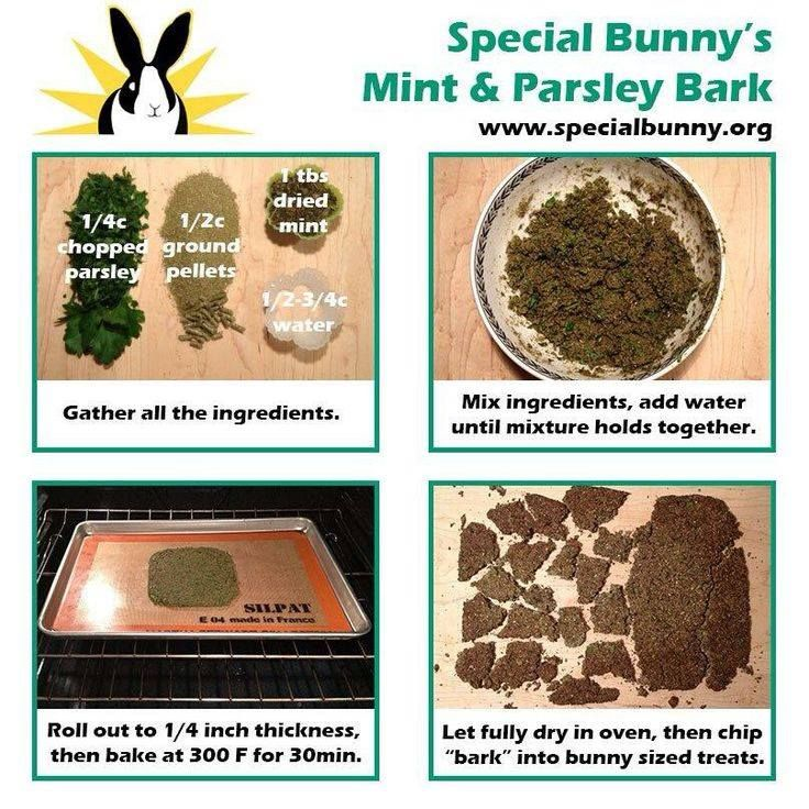 DIY treats for rabbits and guinea pigs! Crushed corriander or parsley may be more appealing to guinea pigs instead of mint