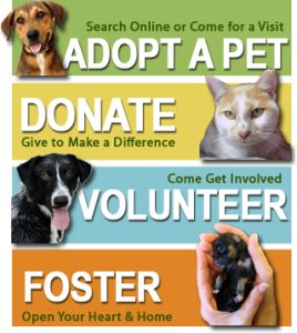 How to Start an Animal Rescue and/or Help Homeless Pets in your City...