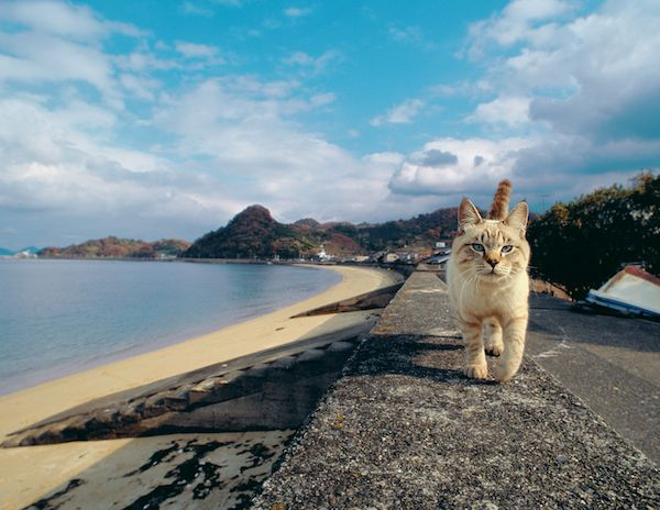 photo by Mitsuaki Iwago -  40年分の猫写真が200枚超!岩合光昭の写真展がヒカリエで開催 | EVENT | LIFE | WWD JAPAN.COM