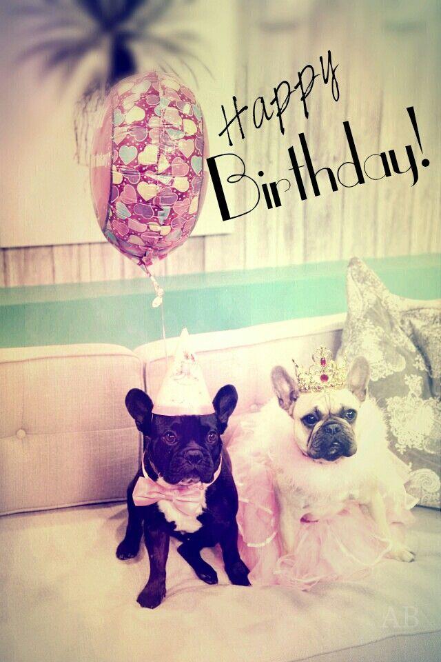 Happy birthday french bulldog