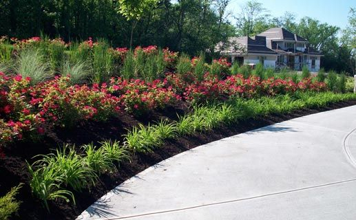 Rose garden driveway landscaping daylillies knock out for Rose landscape design