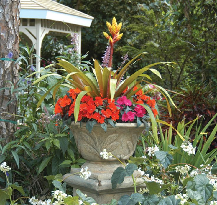 65 best south florida container gardens images on pinterest
