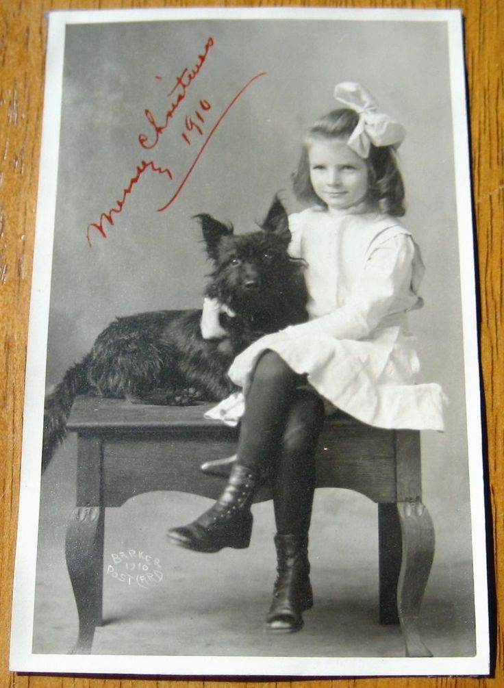 59 best SCOTTISH TERRIER images on Pinterest | Schottische terrier ...