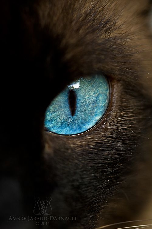 Oeil de chat