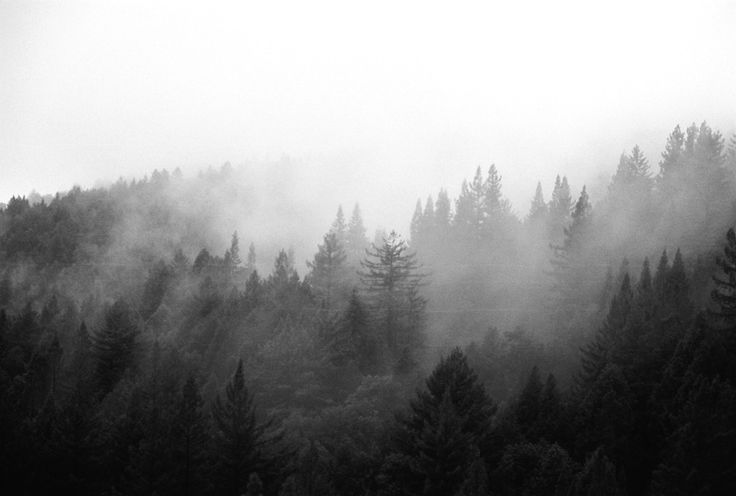 Image tags fog vintage textures - Black And White Forest Tumblr Google Search For A