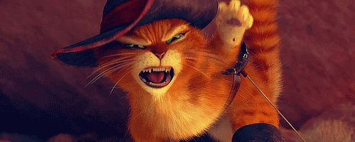 Shrek Cat GIFs - Find & Share on GIPHY
