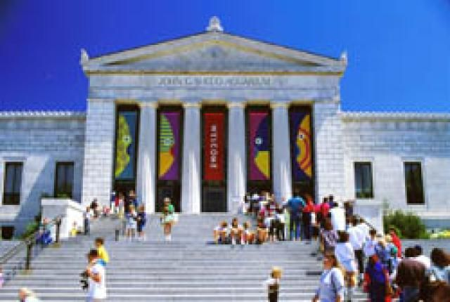 8 Must-See Tourist Attractions in Chicago: Shedd Aquarium