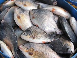 Should we help expand aquaculture in the US? It is the fastest growing food commodity. For all your aquaculture needs go to sulit.com.ph/5113871