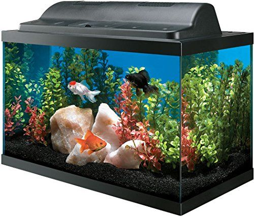 All Glass Aquarium AAG09009 Tank and Eco Hood Combo 10-Gallon Review https://birdhousesforoutside.info/all-glass-aquarium-aag09009-tank-and-eco-hood-combo-10-gallon-review/