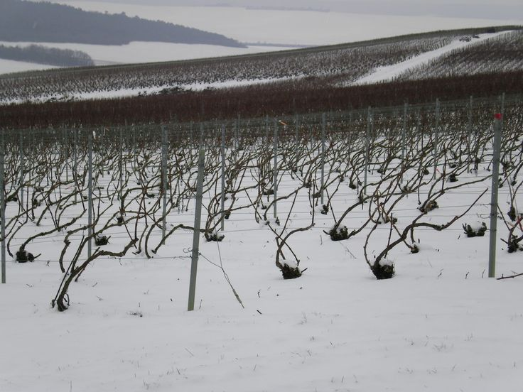 Neige#Vignoble#Montgueux - Champagne Leroy Meirhaeghe