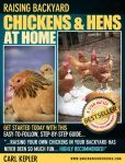Raising Chickens & Hens at Home