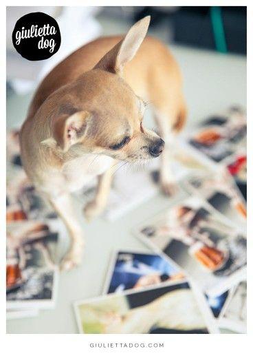 #Chic4Dog presents Giugliettadog - Fashion Made in Milan