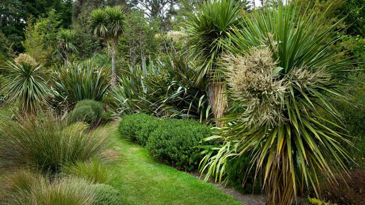 Flaxmere Garden Website  New Zealand Natives