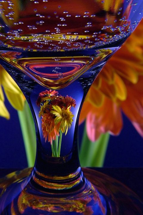 """Gerbera Glass - Photograph at BetterPhoto.co""""refractions...in a drinking glass"""" by Robert Mann"""