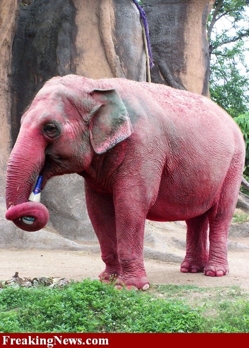 401 best images about Elephant Photos on Pinterest ...