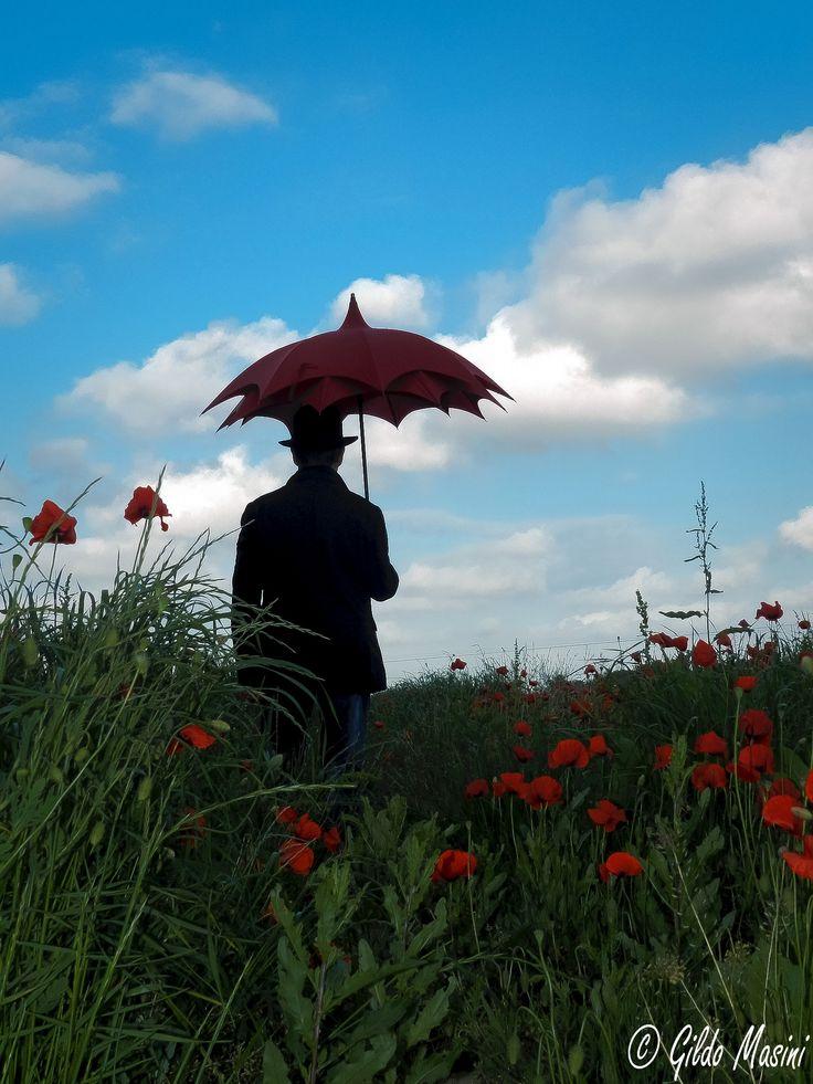 Rain on the poppies? by Gildo Masini on 500px