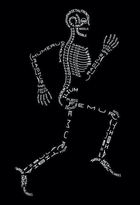 """""""Sensacional"""" - Nomes dos ossos"""