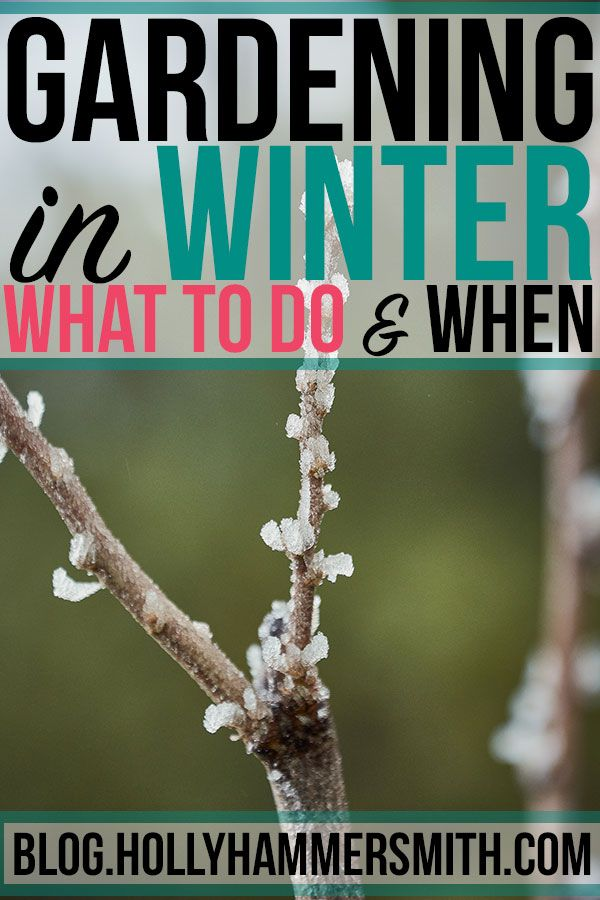1c6f488d3be64444fcb154fcfc387b87 - What Can Gardeners Do In Winter