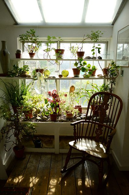 ventana  verde:  plantas en los estantes de pared  a pared--------- window of green: plants on wall shelves