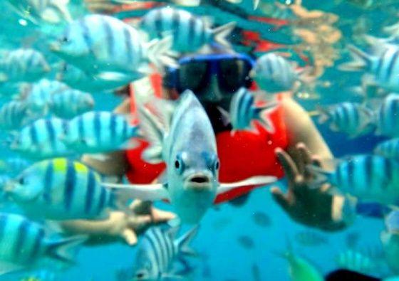 De la reserva de las Visayas al santuario marino de la isla de Tubbataha