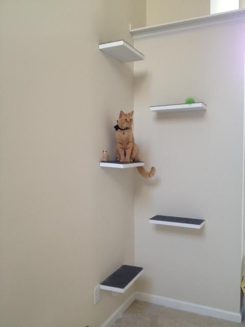 Nail carpeted boards up on a wall to create staggered and anti-slip perches for your cat. You can incorporate your crown molding too. fit for a kitty king!