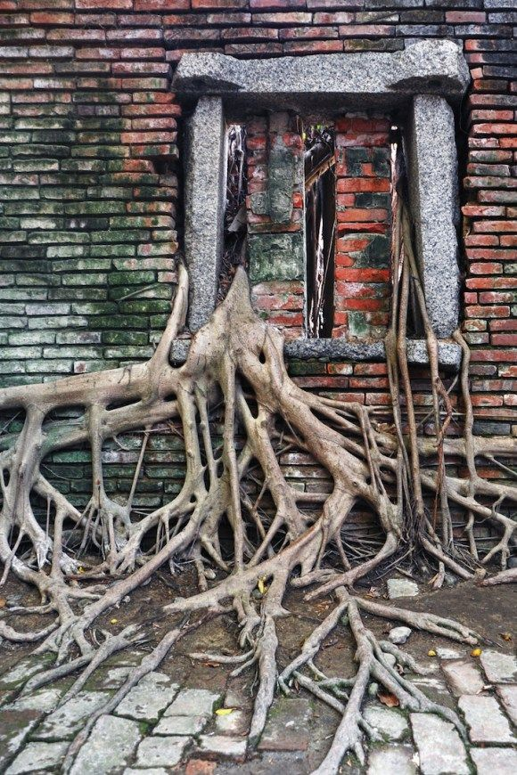 """Já dizia Mario Quintana : """" O que mata um jardim não é o abandono. O que mata um jardim é esse olhar de quem por ele passa indiferente… E assim é com a vida, você mata os sonhos que finge não ver.""""   O poder do abraço da natureza em um armazém abandonado."""