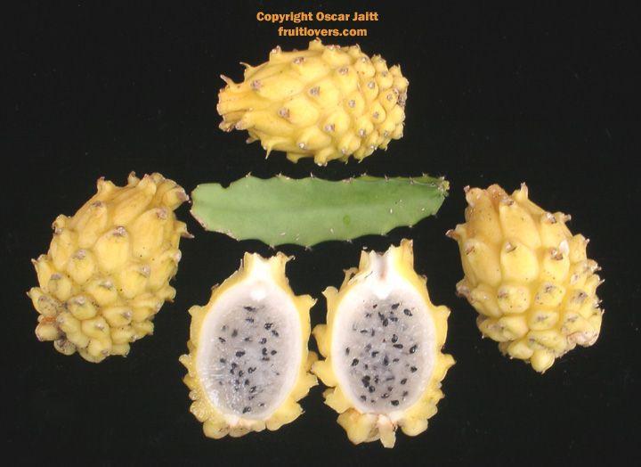 Dragonfruit -- Yellow w/white flesh