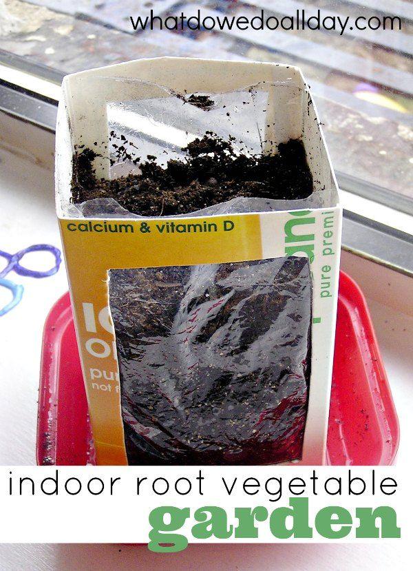 Indoor Root Vegetable Garden