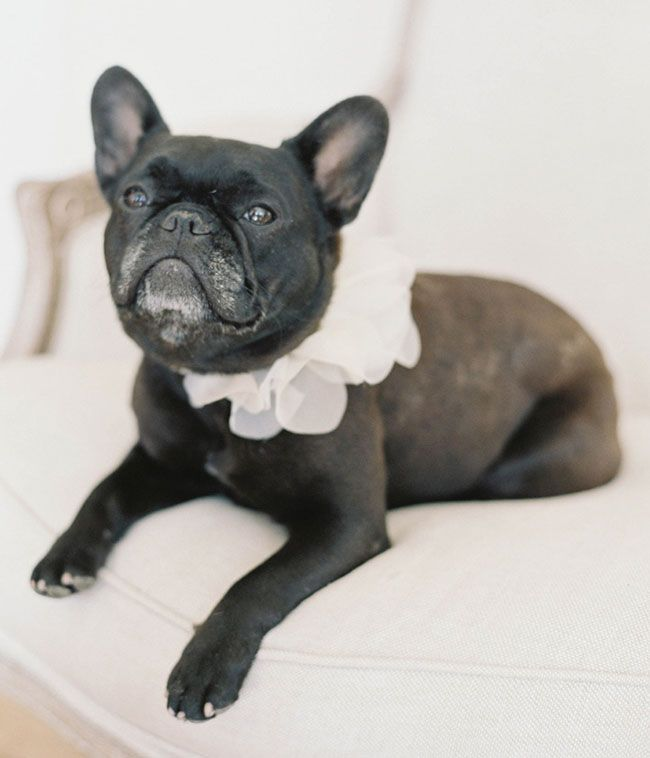 ruffle dog collar from Hushed Commotion