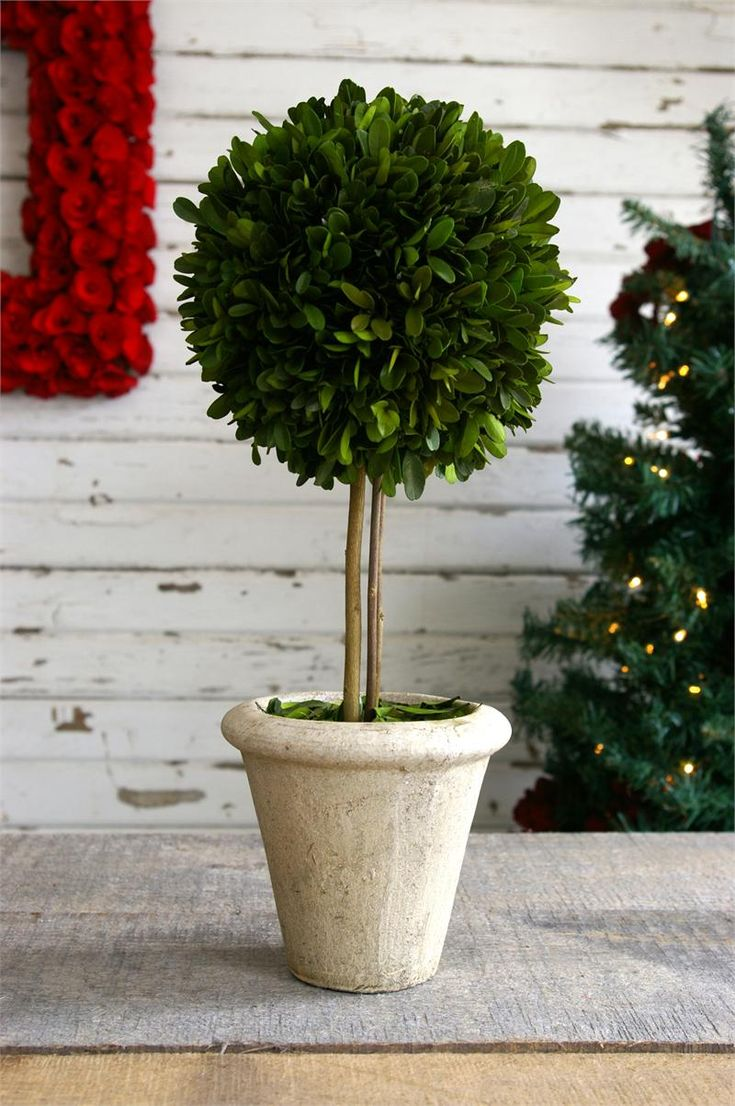 Preserved Boxwood Single Ball Topiaries - 16 Inch (SET OF 2)
