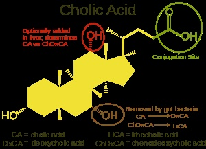 Structure of cholic acid showing relationship to other bile acids