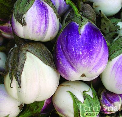 Rosa Bianca EggplantOrganic