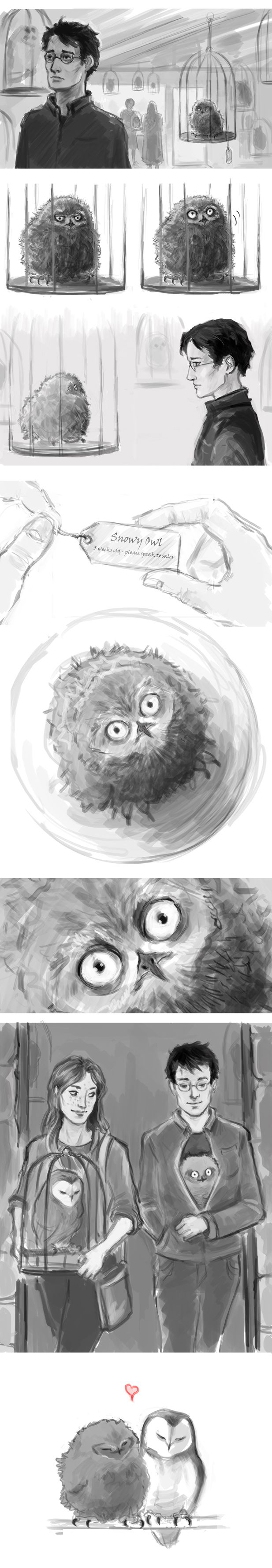 Finding Hedwig's Successor. HP: Owl Shop by ehay on DeviantArt