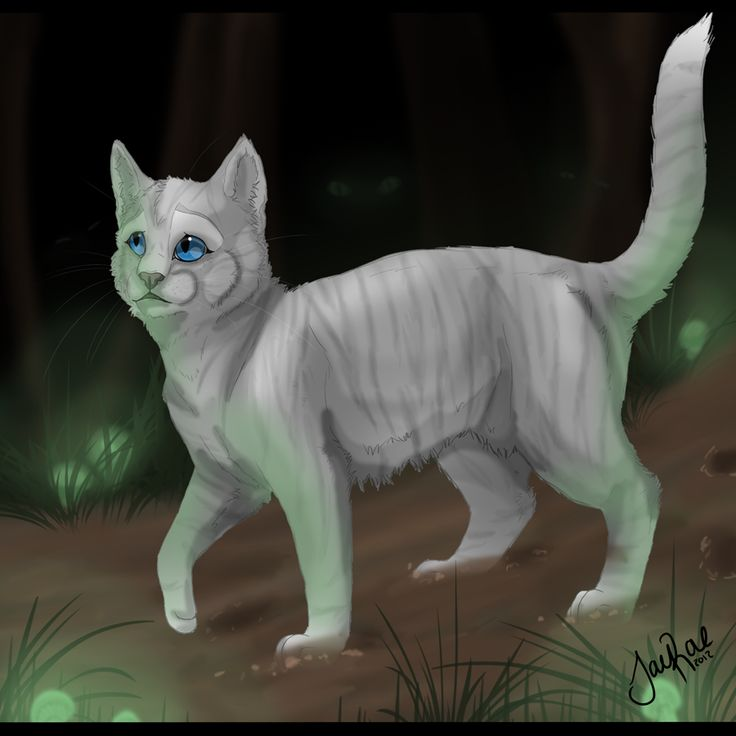 Warriors Forest Of Secrets Lexile: 17 Best Images About Ivypool On Pinterest