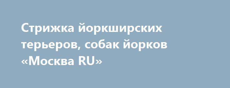 Стрижка йоркширских терьеров, собак йорков «Москва RU» http://www.pogruzimvse.ru/doska/?adv_id=295116 Для любимого животного существа, которое вы взяли под свое покровительство, красивый и здоровый значат примерно одно и то же. Именно для того, чтобы вырасти здоровой, веселой и ухоженной, радуя и хозяина, и окружающих, каждая собака должна познакомиться и с грумером.   Предлагаю вам у Вас на дому полный профессиональный груминг щенка йорка от 4 месяцев. От 1100 рублей по выходным дням, с…