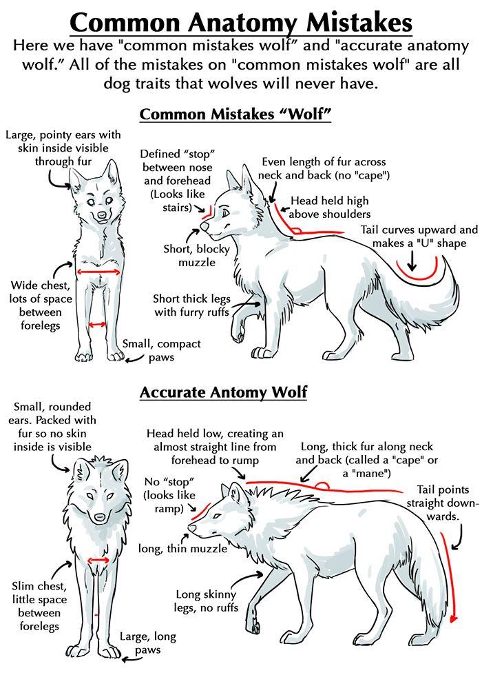 Exelent Dog Skin Anatomy Adornment - Anatomy Ideas - yunoki.info