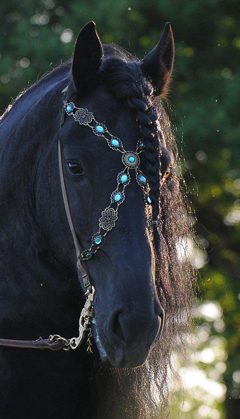 Black horse with jeweled bridle = Stunning Photo