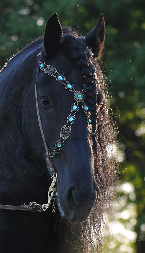 Black horse with jeweled bridle - Stunning Photo