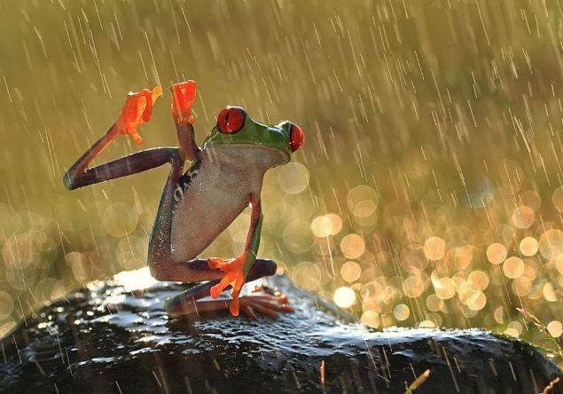 У меня сегодня улиточно-дождливое настроение / Болталка / Разговоры на любые темы